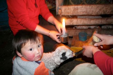 Feeding milk to lamb with ox horn